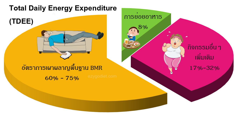 สัดส่วนความต้องการพลังงานของ TDEE ,BMR